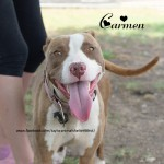 DSC_4399-Carmen-face