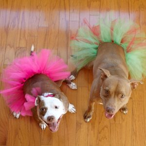 Help these dogs in tutus at the Bark-B-Que cook off