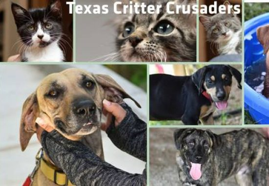Adoptable cats and dogs