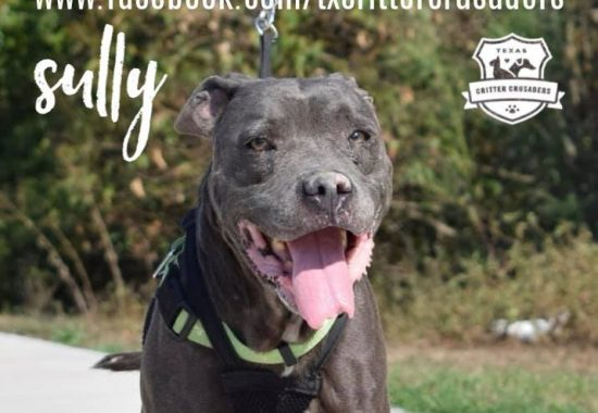 Sully is looking for a hospice home